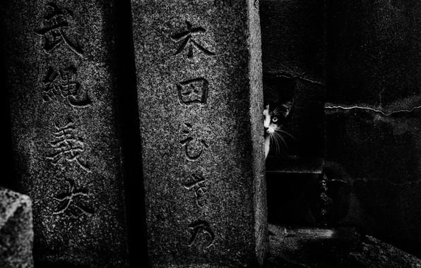 Picture cat, characters, cat, hieroglyphs, tomorca