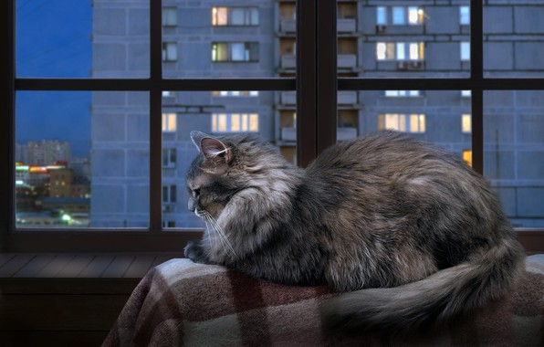 Picture autumn, cat, cat, look, glass, the city, lights, comfort, house, heat, grey, stay, frame, Windows, …