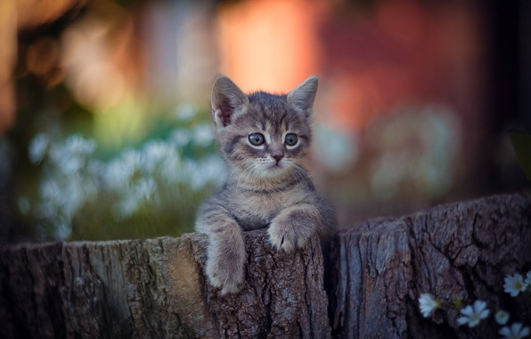 Picture legs, baby, muzzle, kitty, bokeh