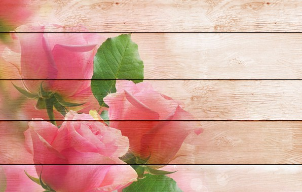 Picture Board, roses, postcard, template, blank