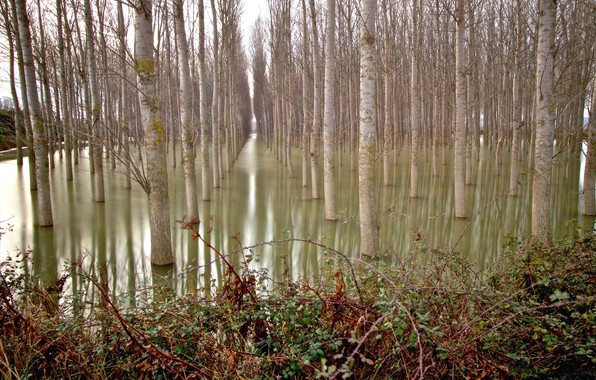 Picture forest, water, trees