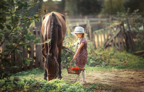 Picture horse, girl, Rowan