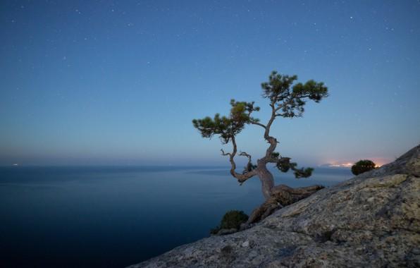Picture sea, the sky, landscape, nature, rock, tree, stars, the evening, Crimea, pine, New Light, Alexander …