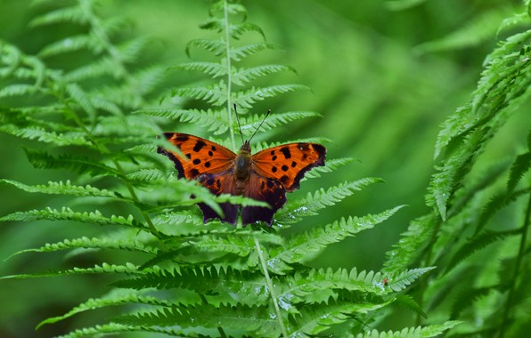 Picture leaves, macro, nature, butterfly, fern