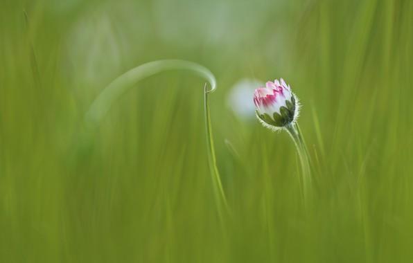 Picture flower, grass, grass, flower, Anna Zuidema