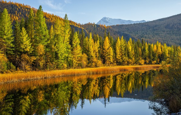 Picture autumn, forest, trees, mountains, lake, reflection, Russia, Altay