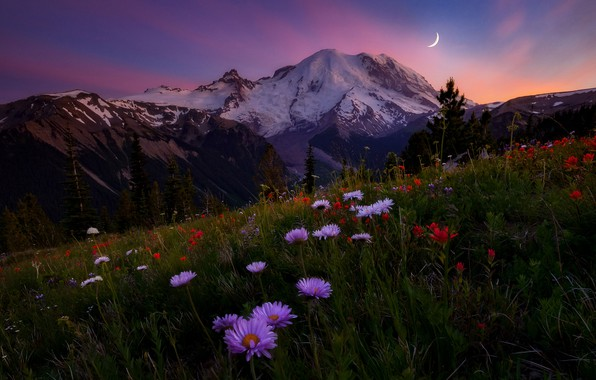 Picture the sky, flowers, mountains, the evening, meadow, Doug Shearer, mount Rainier