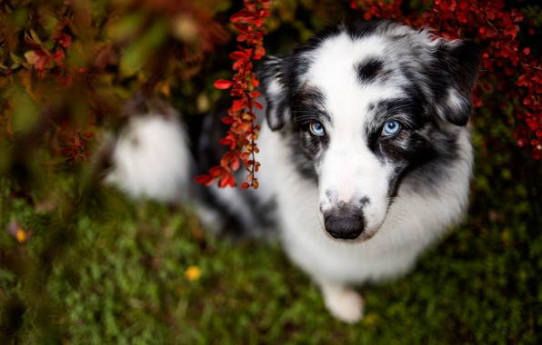 Picture greens, autumn, grass, look, face, branches, nature, pose, the dark background, foliage, portrait, dog, tail, …