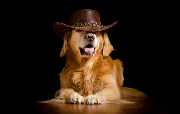 Picture dog, hat, black background