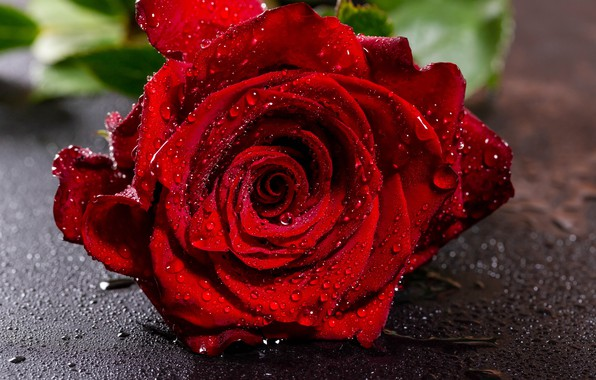 Picture flower, drops, close-up, red, rose, wet, Bud, bokeh
