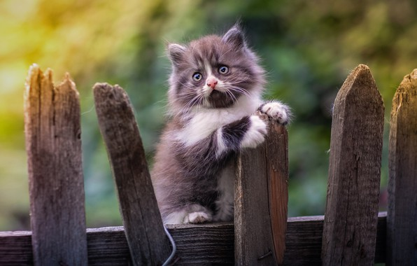 Picture the fence, baby, kitty, bokeh, Yuriy Korotun