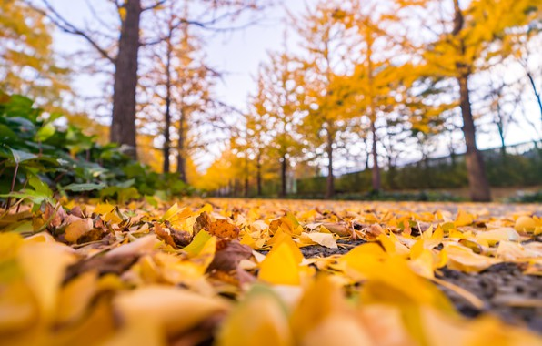 Picture autumn, forest, leaves, trees, Park, colorful, forest, landscape, park, autumn, leaves, tree, path, fall
