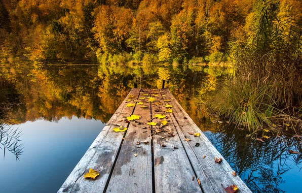 Picture autumn, forest, grass, leaves, landscape, nature, lake, pond, reflection, shore, foliage, Board, yellow, wooden, the …