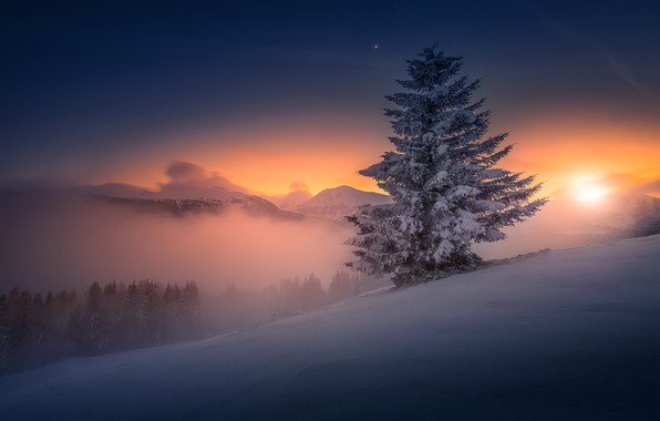 Picture winter, night, nature