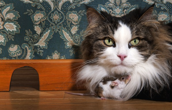 Picture cat, eyes, cat, look, face, close-up, comfort, house, background, wall, Wallpaper, pattern, together, kindness, portrait, …