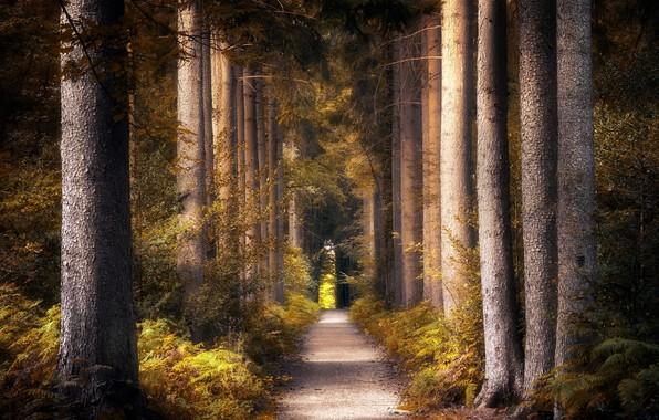 Picture road, autumn, Park