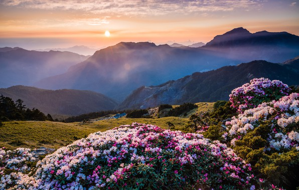 Picture the sun, clouds, flowers, mountains, nature, fog, dawn, hills, the slopes, beauty, spring, morning, Asia, …