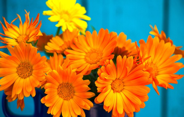 Picture flowers, background, Wallpaper, bouquet, marigolds, calendula, orange flowers, minbucket, flowers marigolds