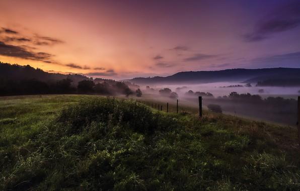 Picture field, summer, sunset, night, fog