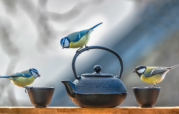 Picture birds, table, background, kettle, Cup, dishes, three, Board, birds, trio, tit, Tits, researchers