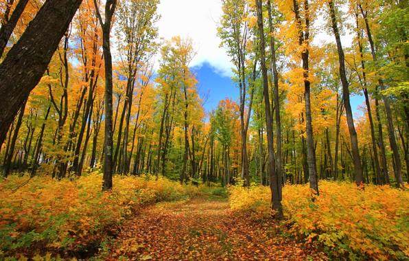 Picture autumn, forest, photo, foliage
