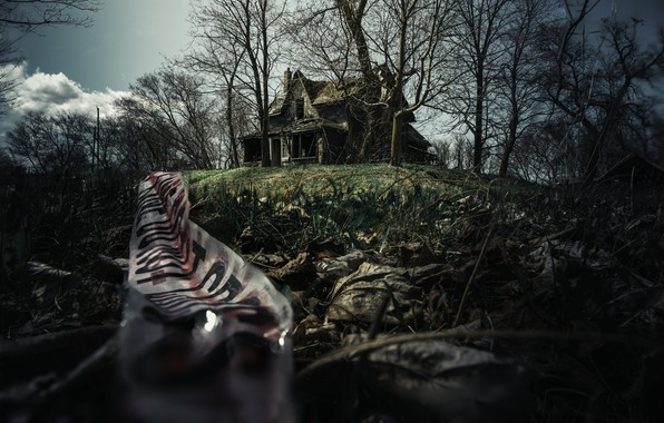 Picture nature, house, the darkness