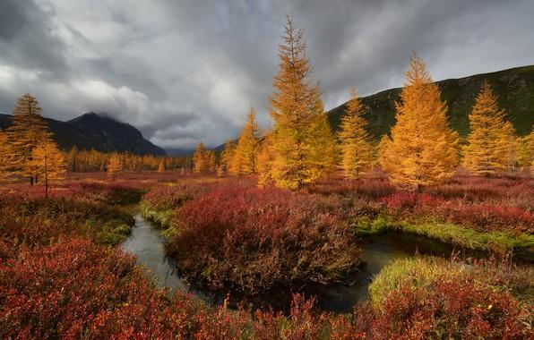 Picture autumn, clouds, trees, landscape, mountains, nature, stream, vegetation, Kolyma, Maxim Evdokimov