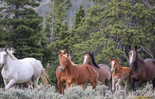 Picture forest, horses, horse, foal, wild horses