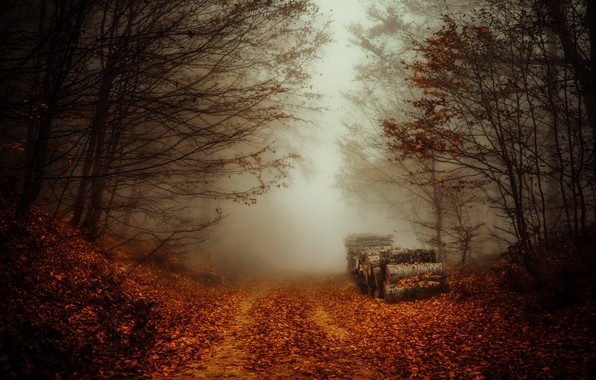 Picture road, autumn, forest, fog, logs