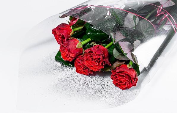 Picture drops, roses, bouquet