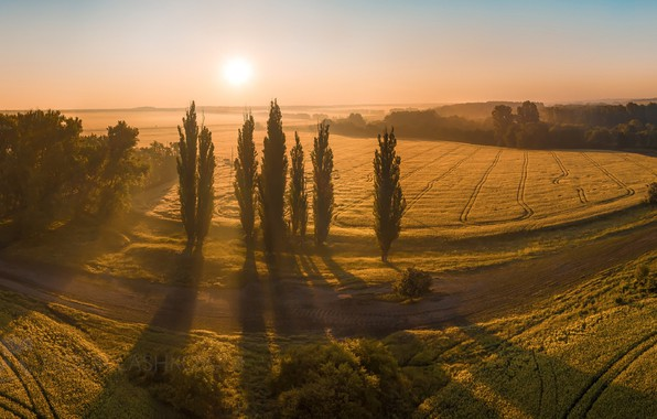 Picture field, summer, the sun, trees, nature, dawn, shadow, Russia, Fedor Lashkov