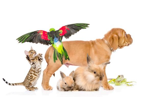 Picture cat, dog, parrot, rabbits