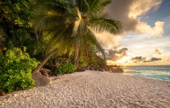 Picture sand, sea, beach, summer, the sun, clouds, Palma, stones, shore, jungle, tropical