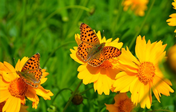Picture Spring, Butterfly, Flowers, Flowers, Macro, Butterfly