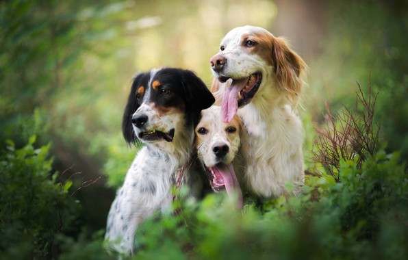 Picture greens, language, dogs, look, leaves, nature, background, thickets, portrait, friendship, three, company, trio, friends, the …