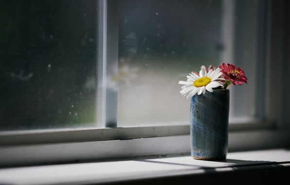 Picture flowers, house, window