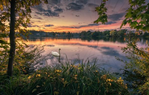 Picture autumn, trees, sunset, lake, Park, bird, Swan