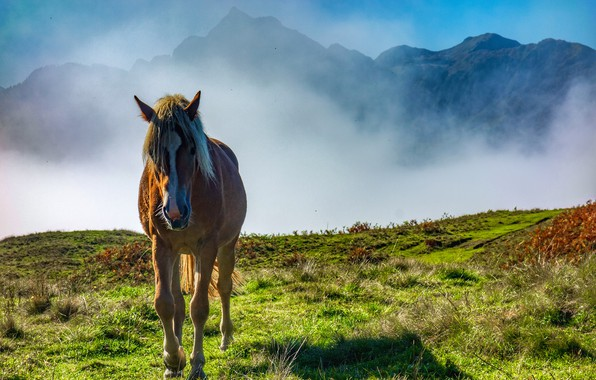 Picture mountains, fog, horse