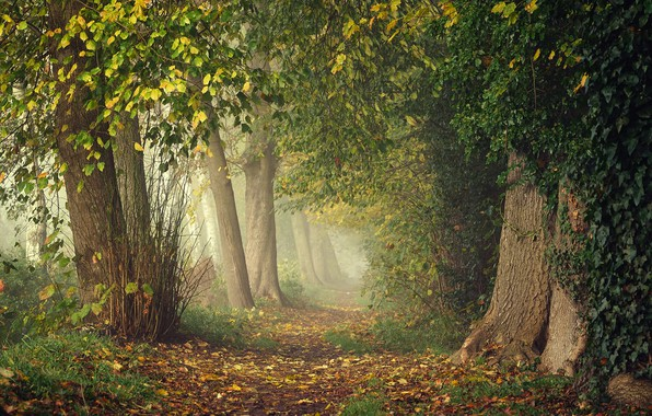 Picture greens, autumn, forest, leaves, branches, fog, Park, thickets, branch, trunks, foliage, track, haze, alley, falling ...