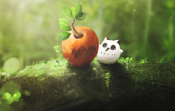 Picture nature, owl, fruit, little