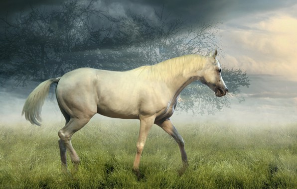 Picture field, white, the sky, grass, look, clouds, trees, nature, fog, horse, collage, horse, treatment, morning, ...