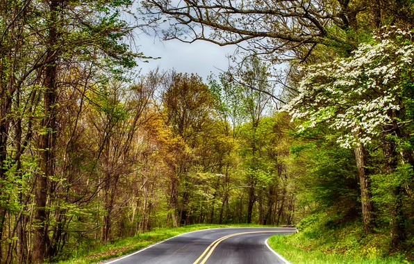 Picture road, autumn, forest, the sky, asphalt, trees, branches, markup, trunks, foliage, highway, flowering, the forest, …