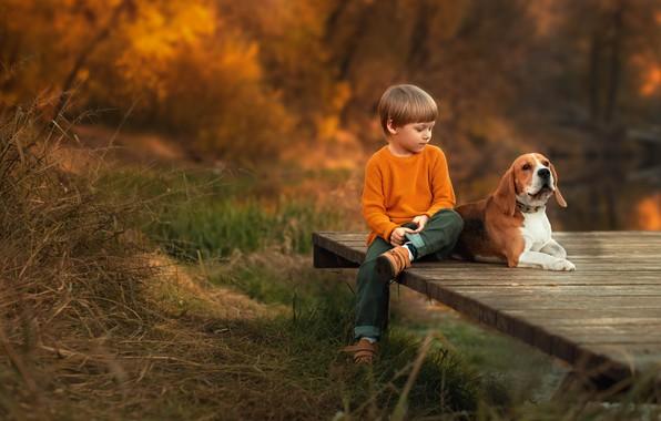 Picture autumn, nature, animal, Board, dog, boy, child, dog, Ekaterina Borisova