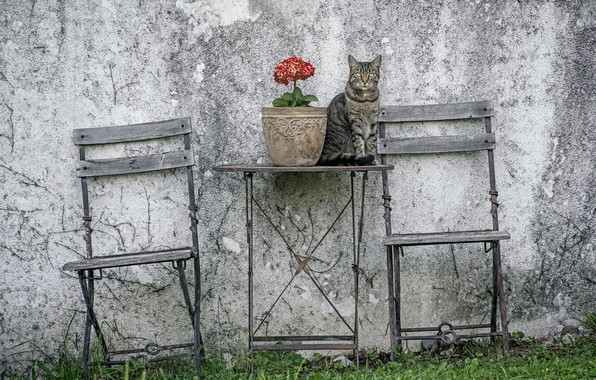 Picture cat, table, chair