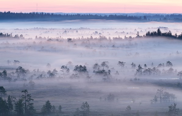 Picture forest, sunset, fog