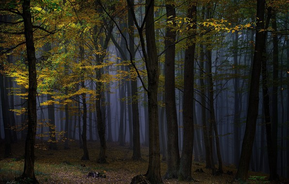 Picture autumn, forest, trees, night, nature, fog