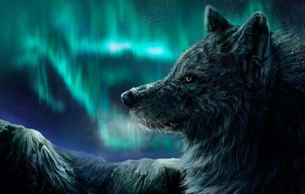Picture winter, night, wolf, Northern lights, падает снег