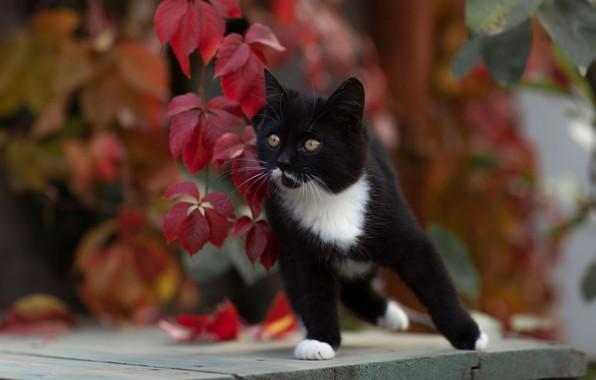 Picture cat, kitty, bokeh, cat, Yuriy Korotun