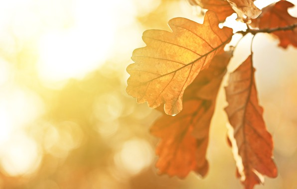 Picture leaves, the sun, photo