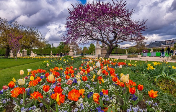 Picture France, Paris, spring, tulips, Elysian Fields